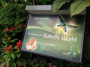 Singapore - Butterfly World
